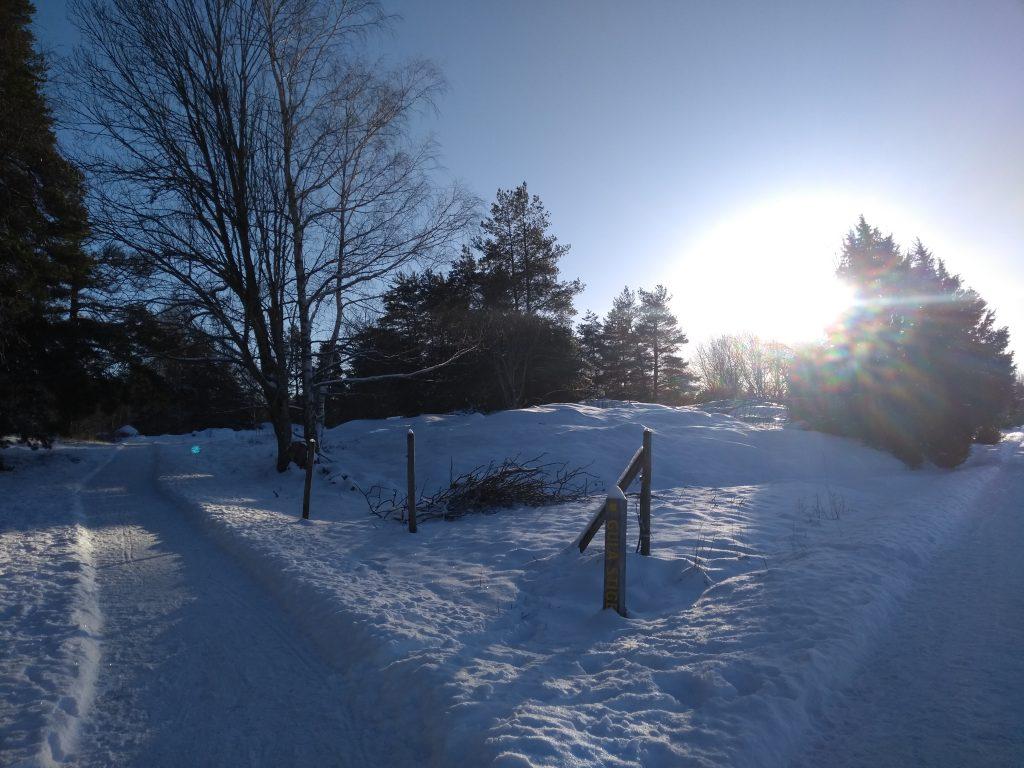snowy landscape uppsala